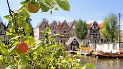 De Amsterdamse Gouden Reael appels