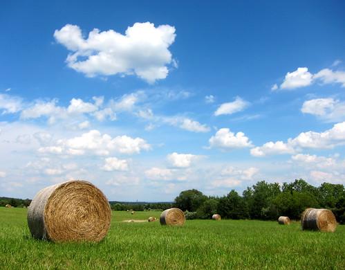 field virginia hey va hay middletown shenandoah bale relianceroad