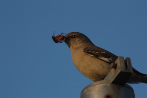 Bird eating bug