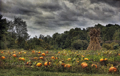 Pumpkin Patch hdr painting syle