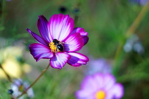 Flowers (Helios Test)