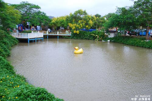 魚池中有很小的黃色小鴨