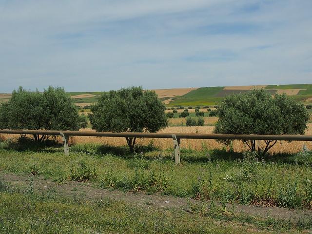 現代的灌溉渠道