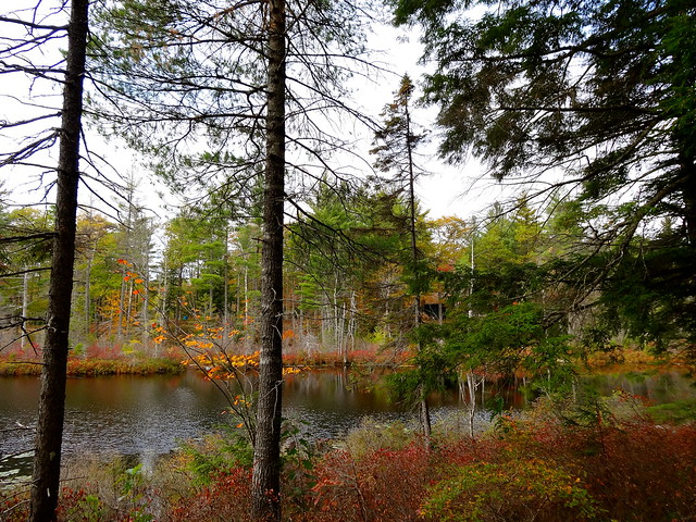 autumn on Mud Pond