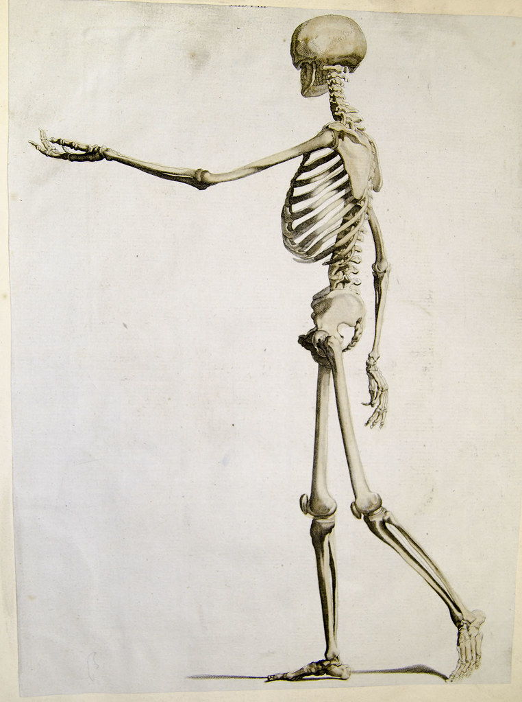 Resultado de imagem para Walking skeleton from Andrew Bell, Anatomia Britannica (1770s-1780s)
