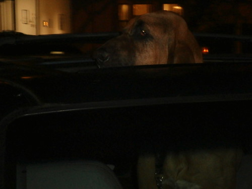 DOGGIE FINDS USE FOR SUN ROOF...FOUND ITEMS in SAN FRANCISCOJ