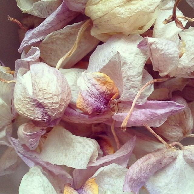 getrockneter #Orchideen #Zauber am Morgen #diekleinendingeimalltagsehen #Blütenzauber #nature