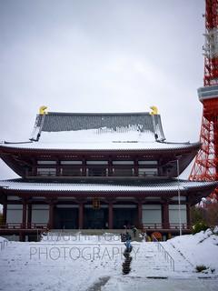 増上寺 雪 2014