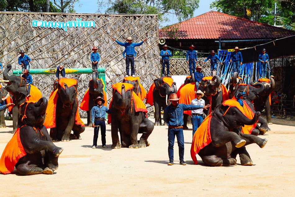 Hasil gambar untuk elephant show pattaya