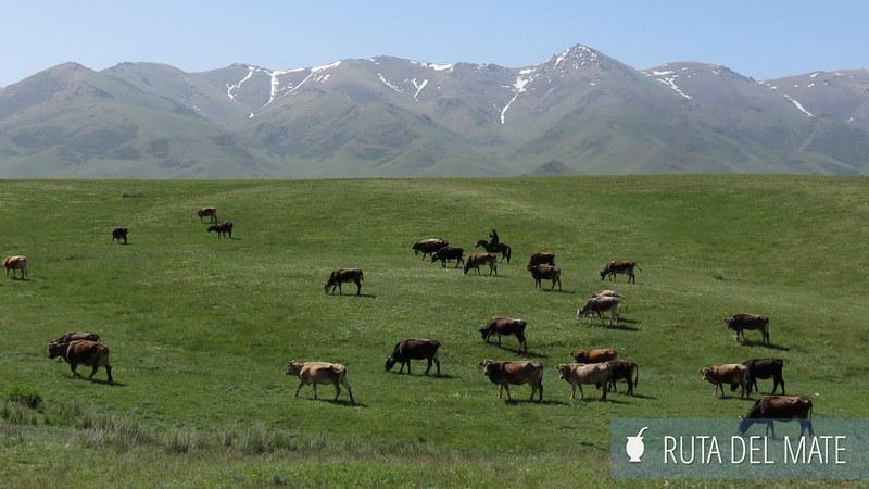 Lago Song-Kol Kirguistán (6)