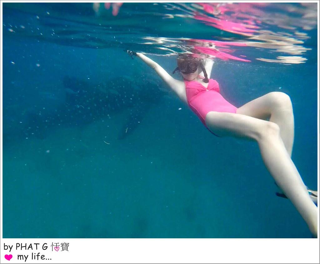 cebu whale shark 23-2