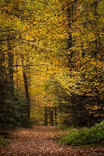Way through the wood