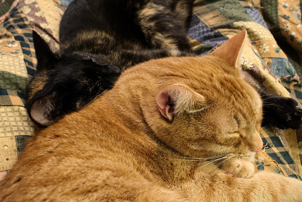 Our youngest cat Trixie snuggles with our oldest cat Sam