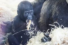 twycross zoo  -3051