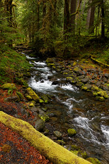 Olympic National Park 5/10/14