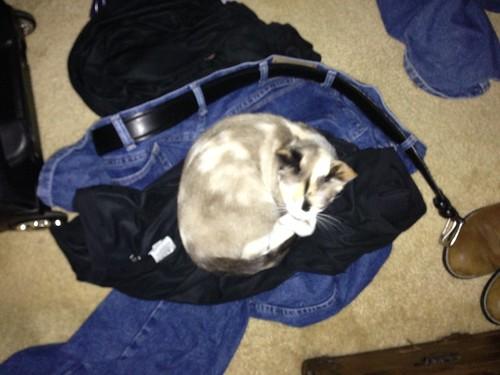 Pants Kitten