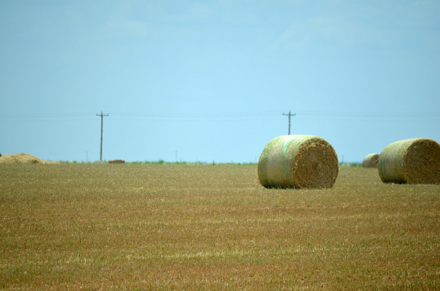 Baled wheat was not an uncommon view in Oklahoma this year