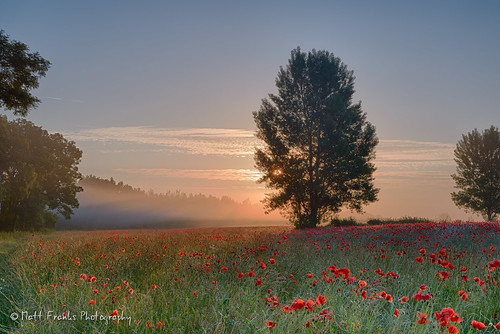 flowers red sun mist tree field misty fog sunrise landscape nikon foggy poppy poppies filters oxfordshire hitech d600 2470 stanfordinthevale