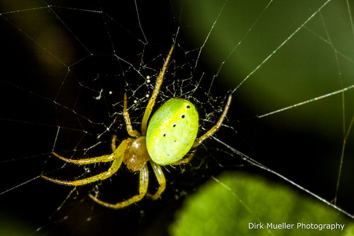 Green Spider by Dirk Mueller Photography