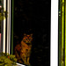 Le chat dans la fenêtre