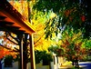 Otoño en mi barrio - Santa Fe - Argentina, Autumn in my neighborhood - Santa Fe - Argentina, Automne dans mon quartier - Santa Fe - Argentina, Autunno nel mio quartiere - Santa Fe - Argentina by isabelitagarcia77