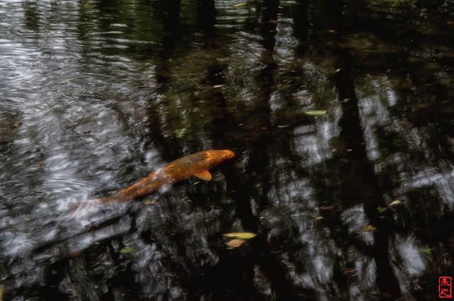 「遊泳」 醍醐寺 - 京都