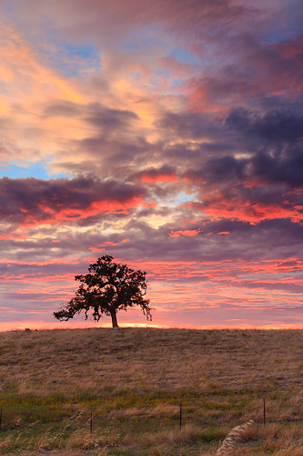 california sunset tree grass clouds day cloudy folsom scottroad