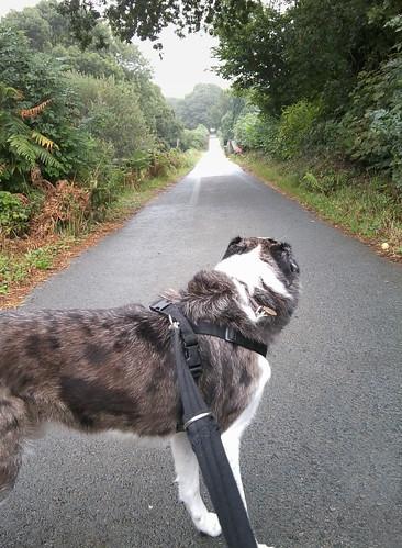Walking Brith by Helen in Wales