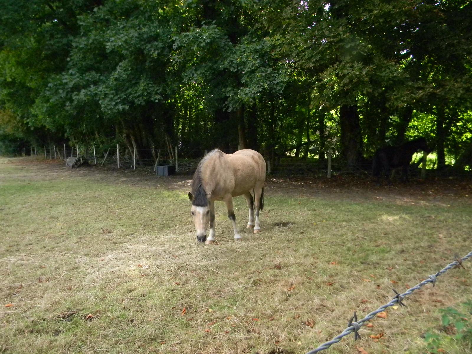 Horse with a haircut Guildford Circular via Albury.