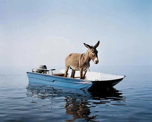 Paola Pivi, Untitled (donkey), 2003
