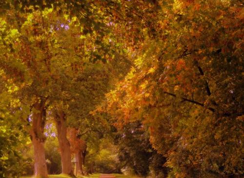 my autumn dream