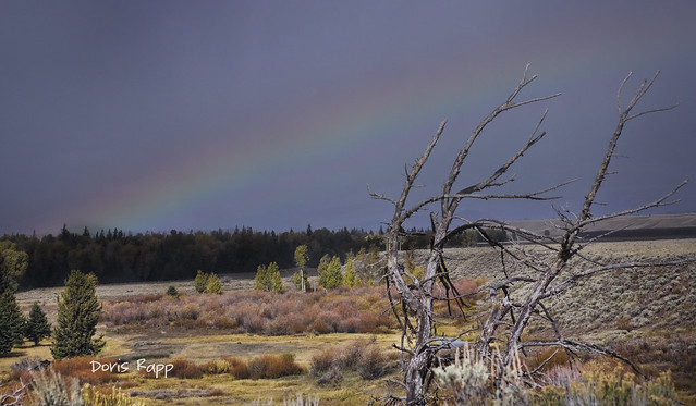 wyoming rainbow