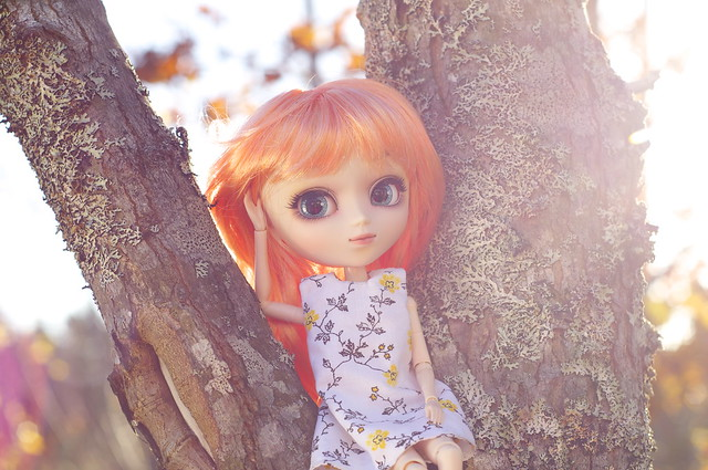 Hanging out in a tree at sunrise