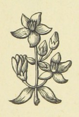 Image taken from page 233 of 'The Works of Alfred Tennyson'