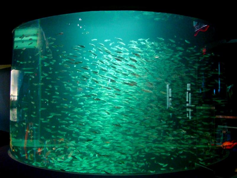 Ripley's Aquarium fish tank