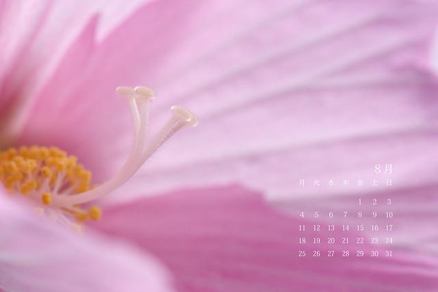 写真_8月カレンダー