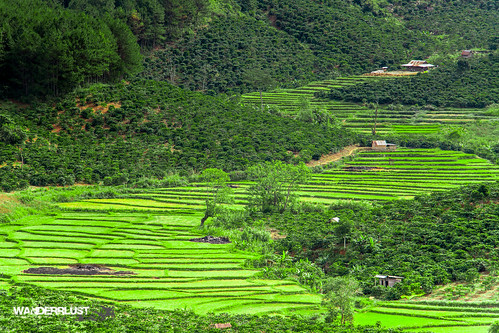 road trip travel mountains field highlands flickr view rice terrace farm country rustic vietnam adventure motorcycle vista dalat natgeo wanderrlust