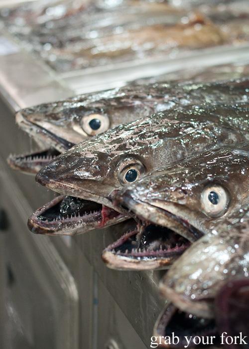 Sharp-toothed fish at Plaza de Lugo Fish Market in A Coruna, Galicia, Spain