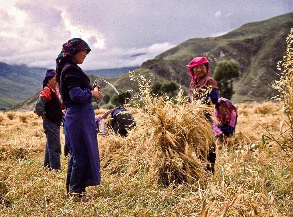 19. Escena de campo en el Tibet. Autor, Erik Törner