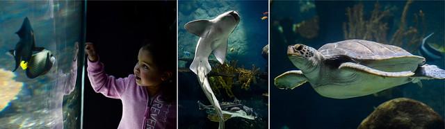 coral reef trio