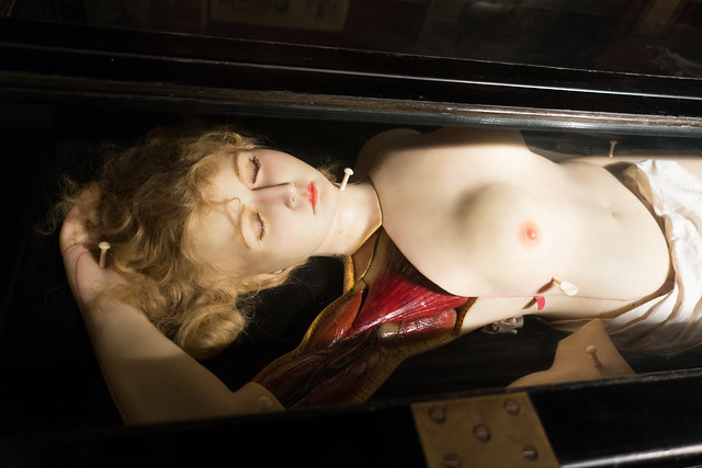 Wax figure used for medical instruction