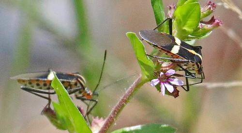 170301 2017 ecuador elfinforest zamora insect