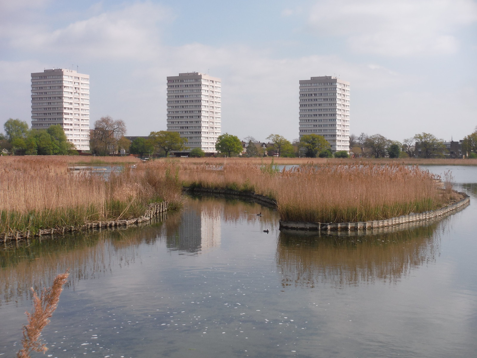 Reed Beds and High Rises, Woodberry Wetlands SWC Short Walk 26 - Woodberry Wetlands (Stoke Newington Reservoirs)