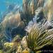 Small photo of Snorkeling Culebra