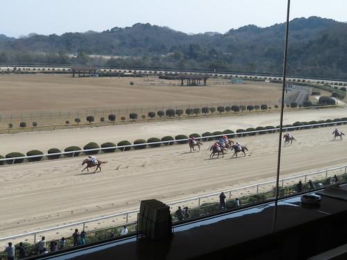 佐賀競馬場のロイヤル席から眺めたレース