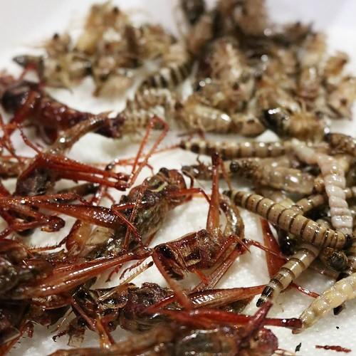 今まで40年以上生きてきて、過去最高にたくさんの虫を(多分、今までに食べた虫の総量を余裕に超える量の虫を)ひと晩で食べたわけだけど、その感想としては、「意外と食べれるじゃん」でした。むしろ、おつまみにぴったり。