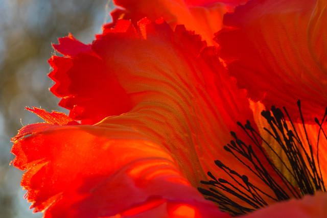 Seidenblume - satin flower (HMM !)
