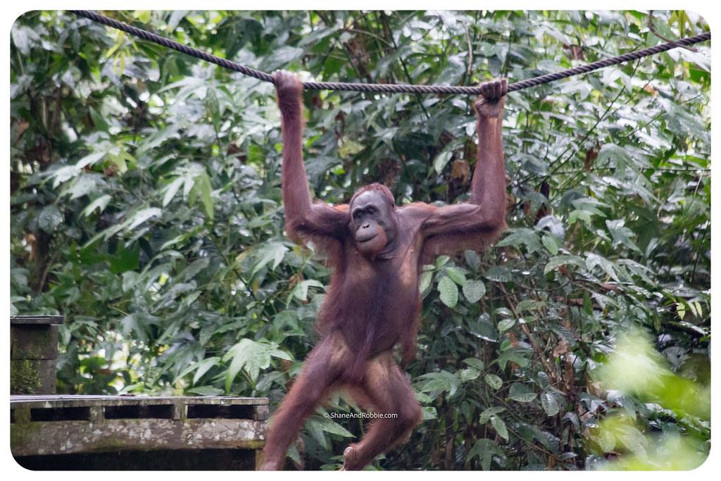Borneo-20170413-_MG_7998