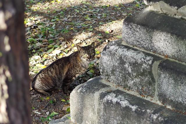 Today's Cat@2017-05-02