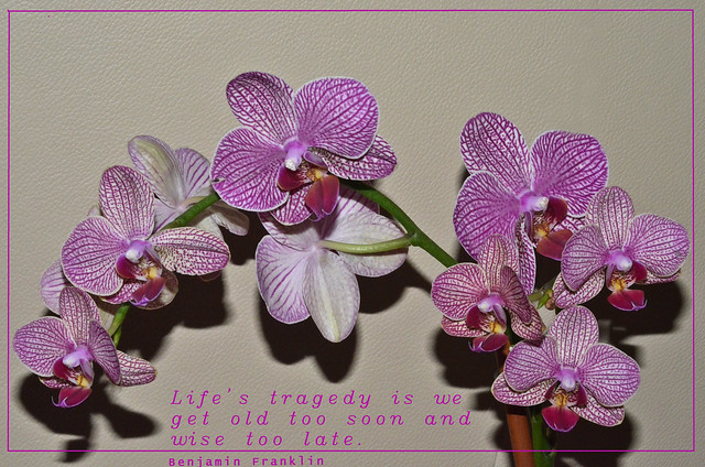 Life is like an orchid....